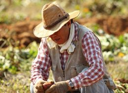 Immigrant Workers: Will Trump Give Farmers a Break?